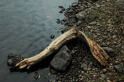 Photograph - Lost Appendage by Donna Blackhall
