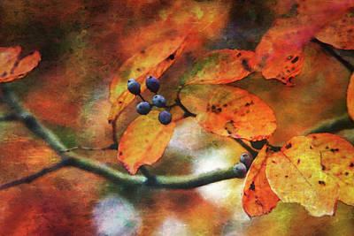 Lost Autumns Beauty 6570 Ldp_2 Art Print