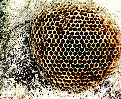 Wasp Nest Photograph - Lost Colony by James Temple