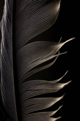 Photograph - Lost Feather by Erica Kinsella