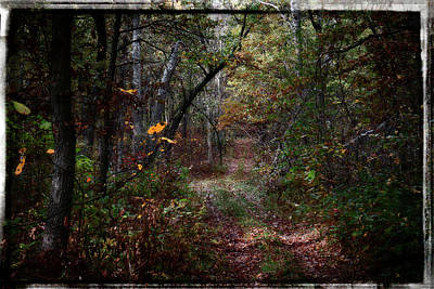 Photograph - Lost In Autumn by Scott Kingery