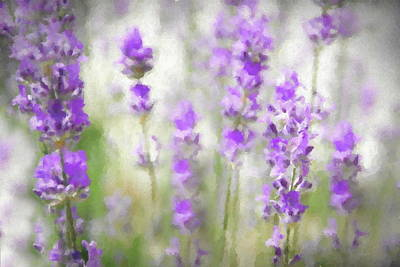 Photograph - Lost In Lavender by Andrea Kollo