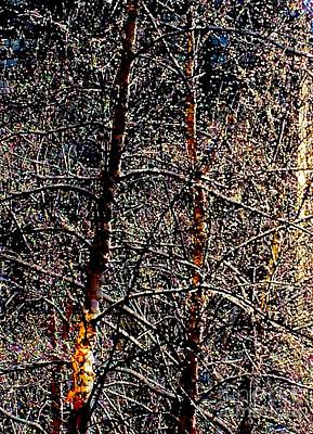 Abstract Photograph - Lost In Narnia by Debra Banks