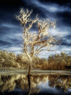 Photograph - Lost In The Flood by Steve Zimic