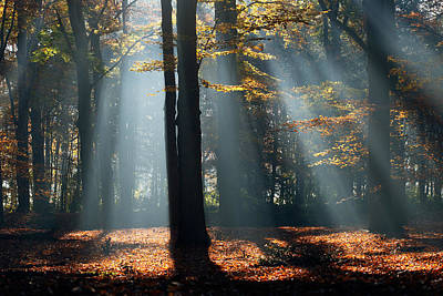 Nederland Photograph - Lost In The Light by Roeselien Raimond