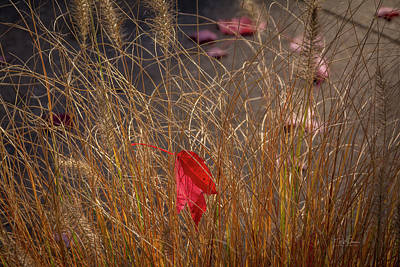 Photograph - Lost In Weeds by Bill Posner