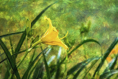 Photograph - Lost Lily by John Rivera