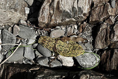 Fort Stark Photograph - Lost Net by Ron St Jean