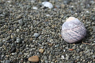 Photograph - Lost Shell by Dylan Punke