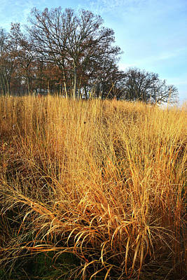 Photograph - Lost Valley Oaks And Prairie Grasses In Glacial Park by Ray Mathis