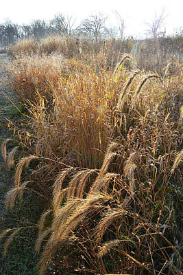Photograph - Lost Valley Prairie Grasses In Glacial Park by Ray Mathis