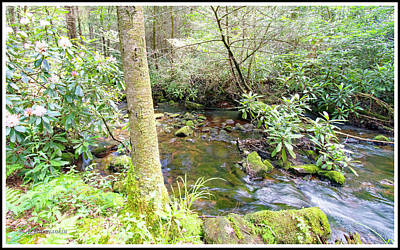 Photograph - Lotic Ecosystem, Mountain Stream In Summer by A Gurmankin