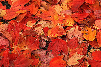 Photograph - Lots O Leaves 2 by Suzanne DeGeorge