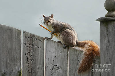 Photograph - Lots O Nuts by Jan Piller
