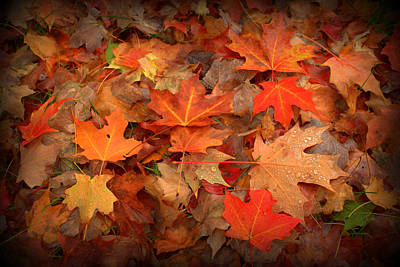 Photograph - Lots O'leaves by Suzanne DeGeorge