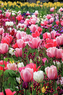 Photograph - Lotsa Tulips by James Eddy