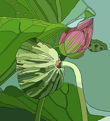 Lotus And Bud Art Print
