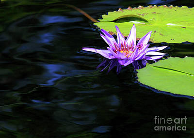 Photograph - Lotus And Dark Water Refection by Paula Guttilla