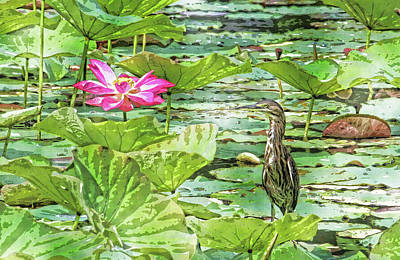 Photograph - Lotus And Green Heron by HH Photography of Florida