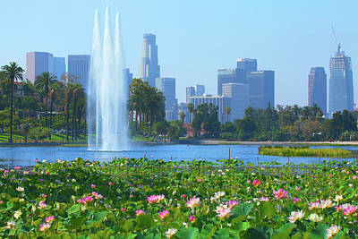 Photograph - Lotus Blooms In Echo Park And Los Angeles Skyline by Ram Vasudev