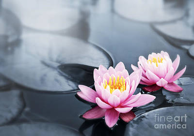 Water Lily Pond Photograph - Lotus Blossoms by Elena Elisseeva