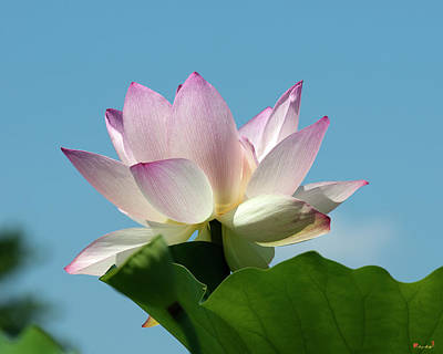 Photograph - Lotus--blue Sky I Dl0104 by Gerry Gantt