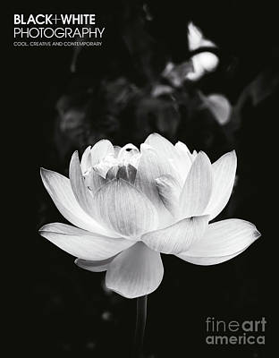 Photograph - Lotus Boli Furen  by Tim Gainey