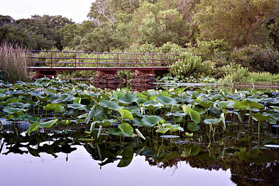 Photograph - Lotus Bridge by Lana Trussell