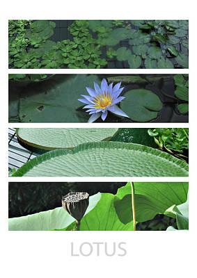 Plants Photograph - Lotus by David Halperin