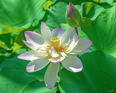 Photograph - Lotus--fading I Dl0079 by Gerry Gantt