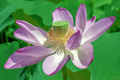 Photograph - Lotus--fading II Dl0080 by Gerry Gantt