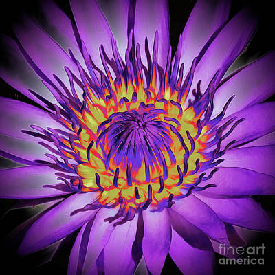 Photograph - Lotus Flower Blossom by Scott Cameron
