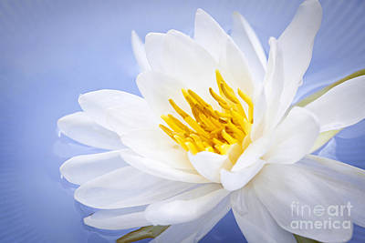A White Christmas Cityscape - Lotus flower by Elena Elisseeva
