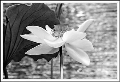Lotus Flower In Black And White Art Print