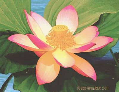 Painting - Lotus Flower by Sophia Schmierer