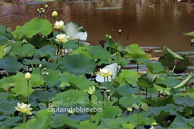 Photograph - Lotus Flowers by Captain Debbie Ritter