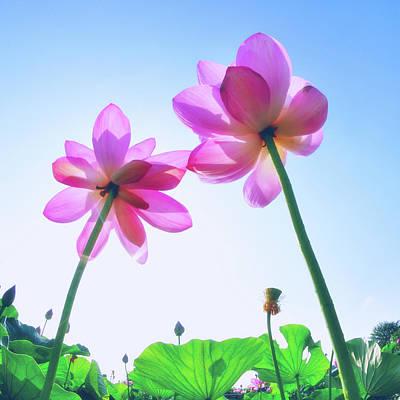 Lotus Garden Print by Hidehiko Sakashita