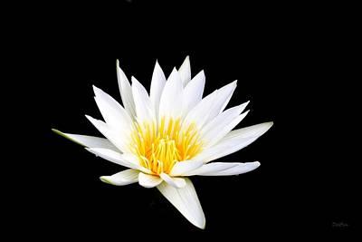 Photograph - Lotus Glow by Deborah  Crew-Johnson