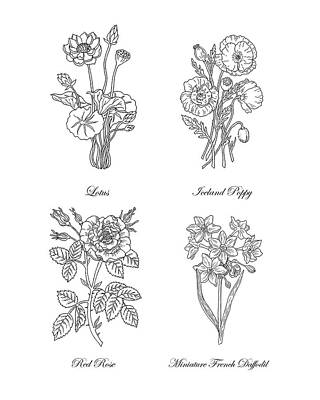 Painting - Lotus Iceland Poppy Red Rose Daffodils Drawing by Irina Sztukowski