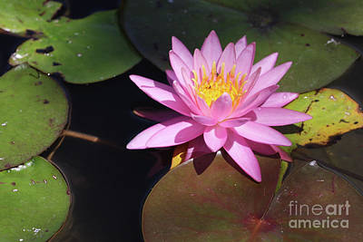 Wall Art - Photograph - Pretty In Pink by Tracy Farrand