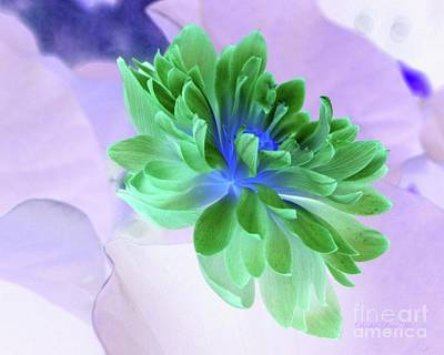 Photograph - Lotus  In Negative by Dodie Ulery