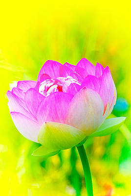 Photograph - Lotus by Michael Hubley