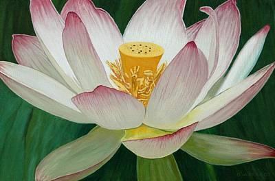 Lotus Of Awakening Art Print by Allan OMarra