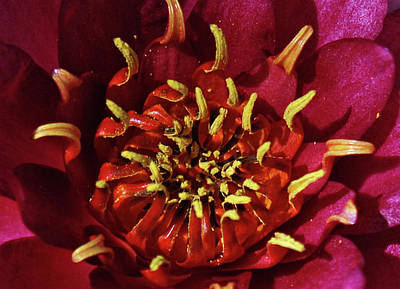 Photograph - Lotus Opening I by James Granberry