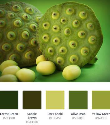 Digital Art - Lotus Pods Palette by Jennifer Baulch