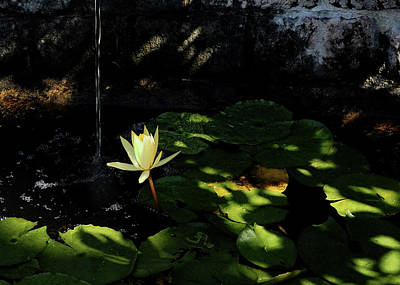Photograph - Lotus Pond by Jim Hill