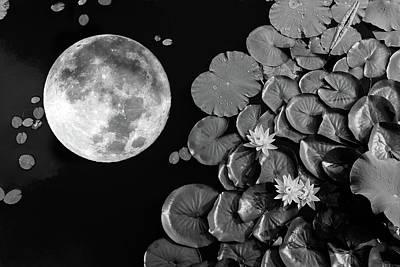 Photograph - Lotus Pond Supermoon by Roy Cruz