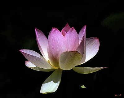 Photograph - Lotus--purity 24o by Gerry Gantt