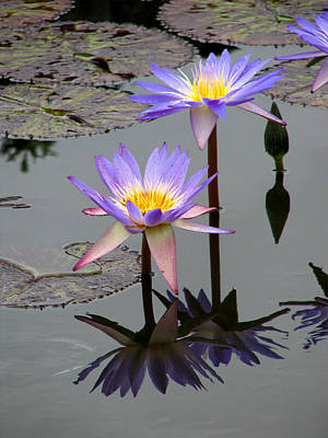 Floral Landscape Photograph - Lotus Reflection 4 by David Dunham