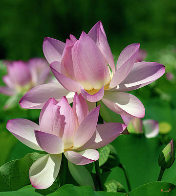 Photograph - Lotus--sisters I Dl0082 by Gerry Gantt